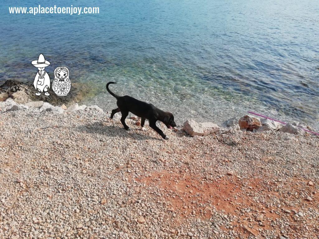 A dog at the beach in Ksamil Albania